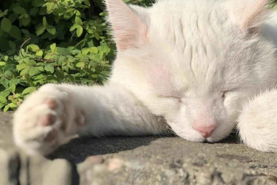 "Bald so berühmt wie ""Grumpy Cat""? Dieser Kater ist der absolute Hit"