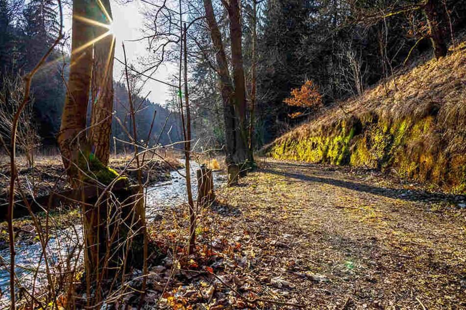 Der Weg durchs Colmnitzbach-Tal ist gut in Schuss. Einige andere Wege sind vorübergehend aber in schlechtem Zustand, denn schwere Transporter rumpeln noch durch die Wälder, um Sturm-Holz abzutransportieren.