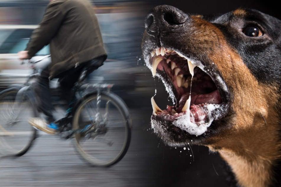 Die Deutschen sollen Hunde auf zwei Afrikaner gehetzt haben. (Bildmontage)
