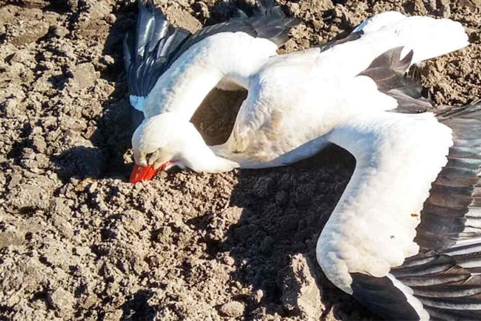 Grausam! Tierhasser vergiften Vögel mit Insektizid