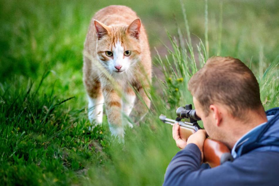 Katze durch Schuss aus Luftgewehr getötet