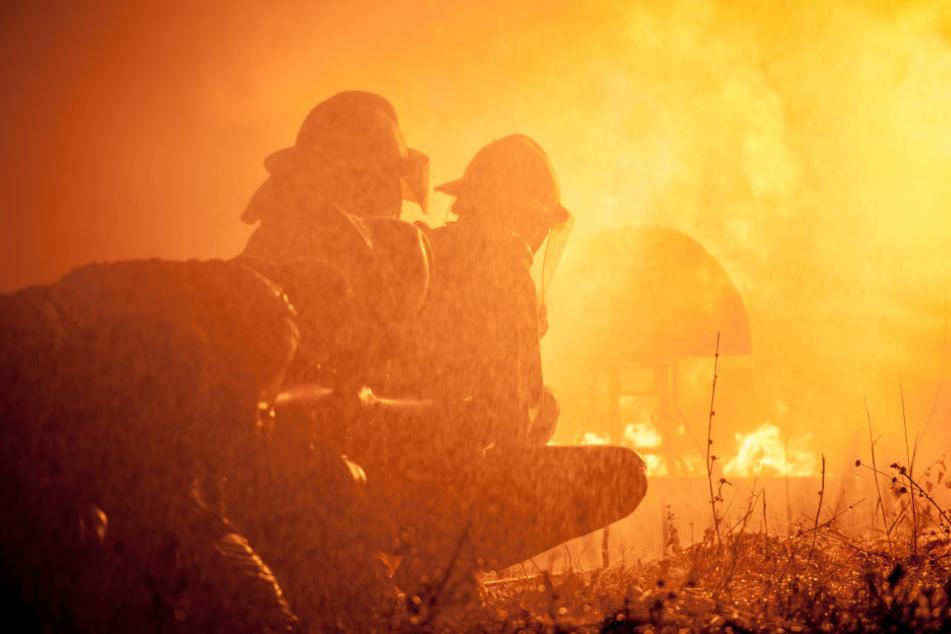 Das Lödlauer Forstgebiet ist gesperrt: Temperaturen von stellenweise bis 500 Grad verhindern das Vorankommen der Feuerwehr. (Symbolbild)