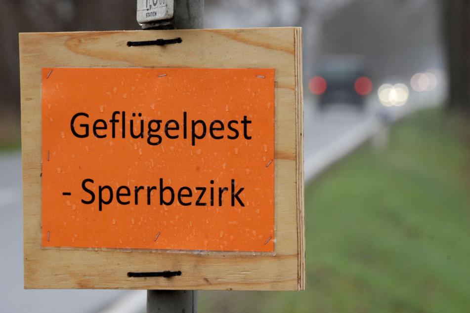 In Thüringen gibt es nun einen zweiten Vogelgrippe-Fall.
