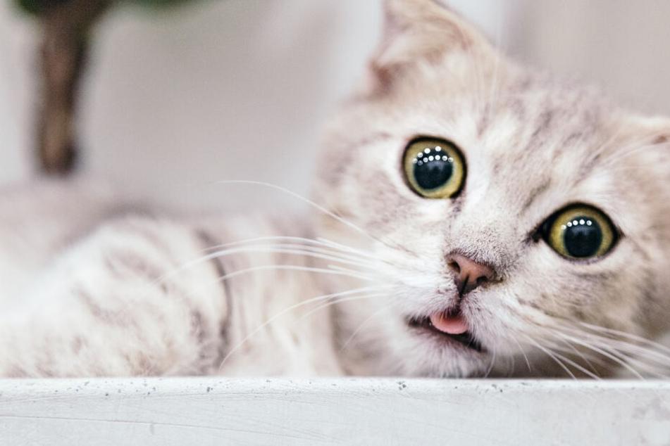 Katzen-Erziehung: Ein Ding der Unmöglichkeit, oder?