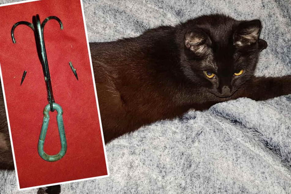 Wie grausam! Kleine Katze mit riesigem Angelhaken im Bein gefunden