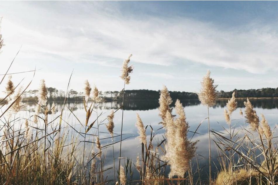 Ein Sucheinsatz am Neustädter See in Magdeburg hat am Samstag nicht zum Erfolg geführt. (Symbolbild)