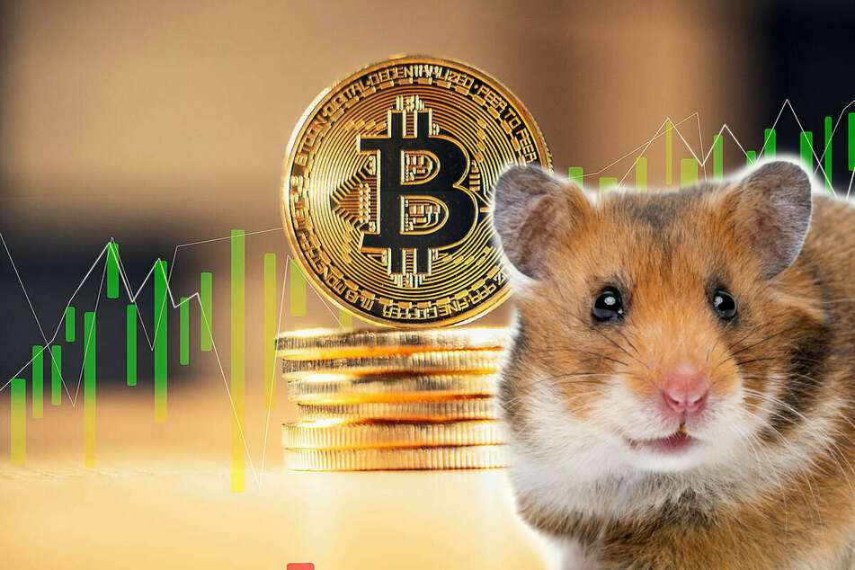 Rodent of Wall Street: Mr.Goxx the hamster is officially one of the world's top crypto-traders