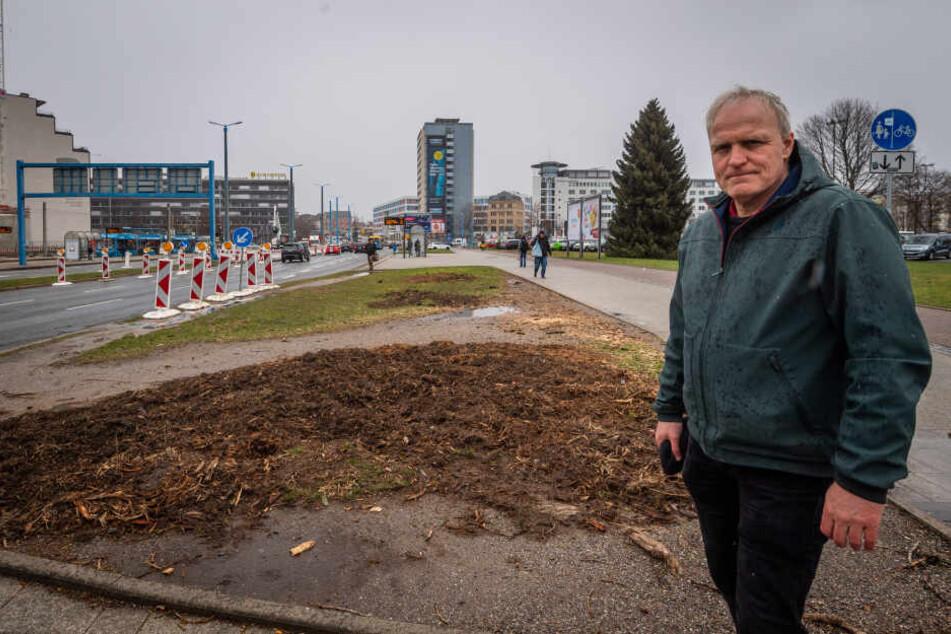 Für die neue Johannisvorstadt wurden mehr als ein Dutzend gesunde Bäume gefällt