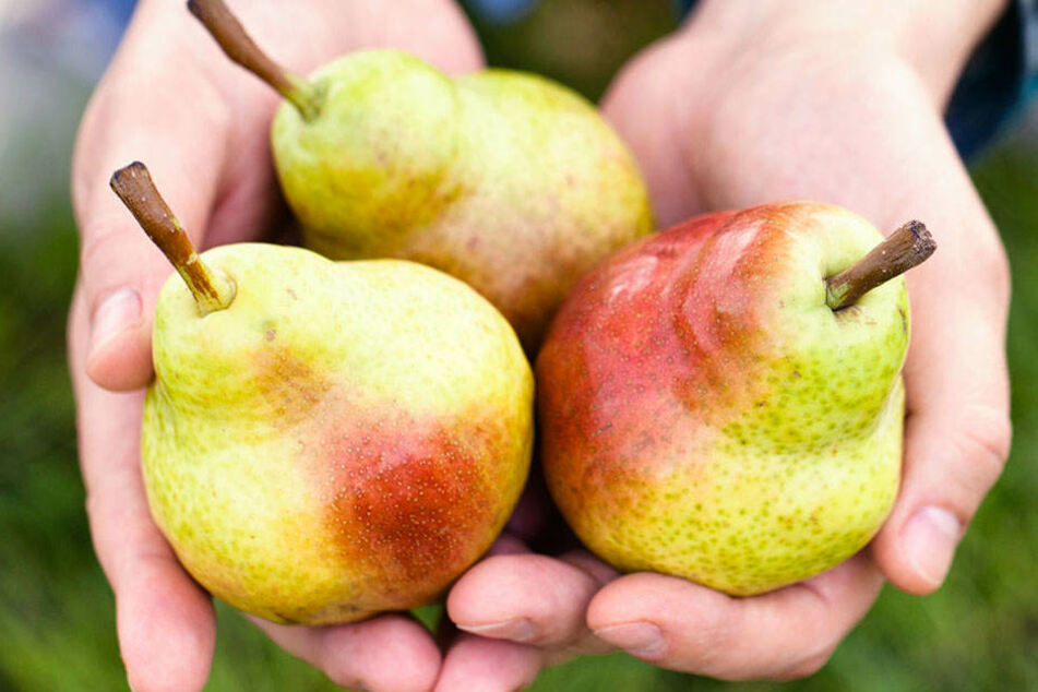 Birnen stecken voller wichtiger Mineralstoffe und Vitamine.