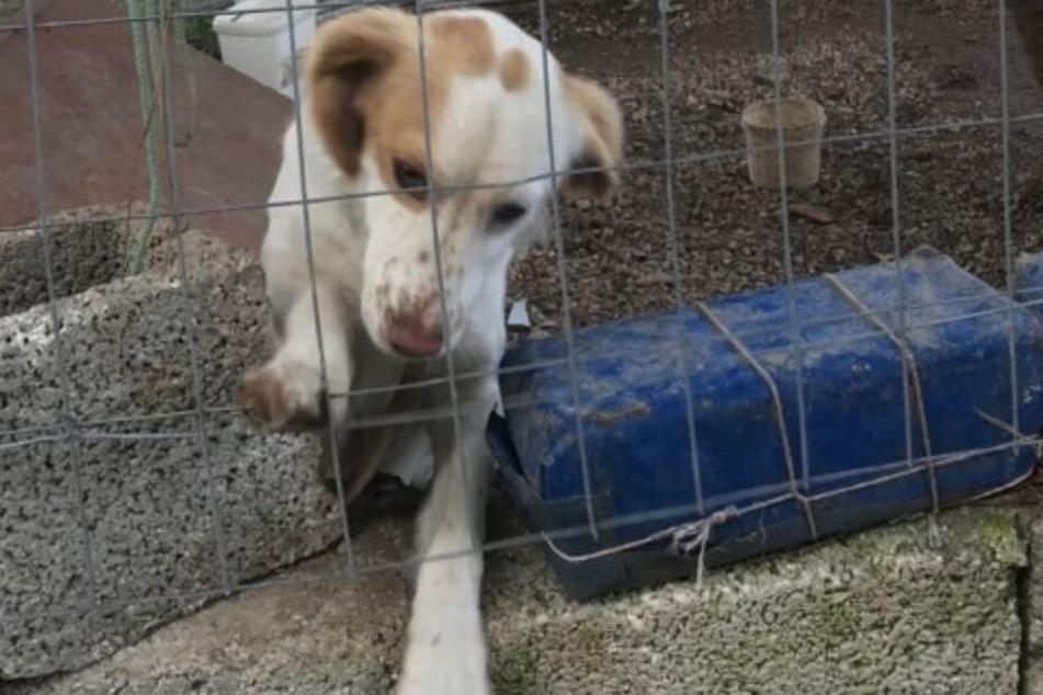 Dieser arme Hund wurde von seiner Familie gehasst.