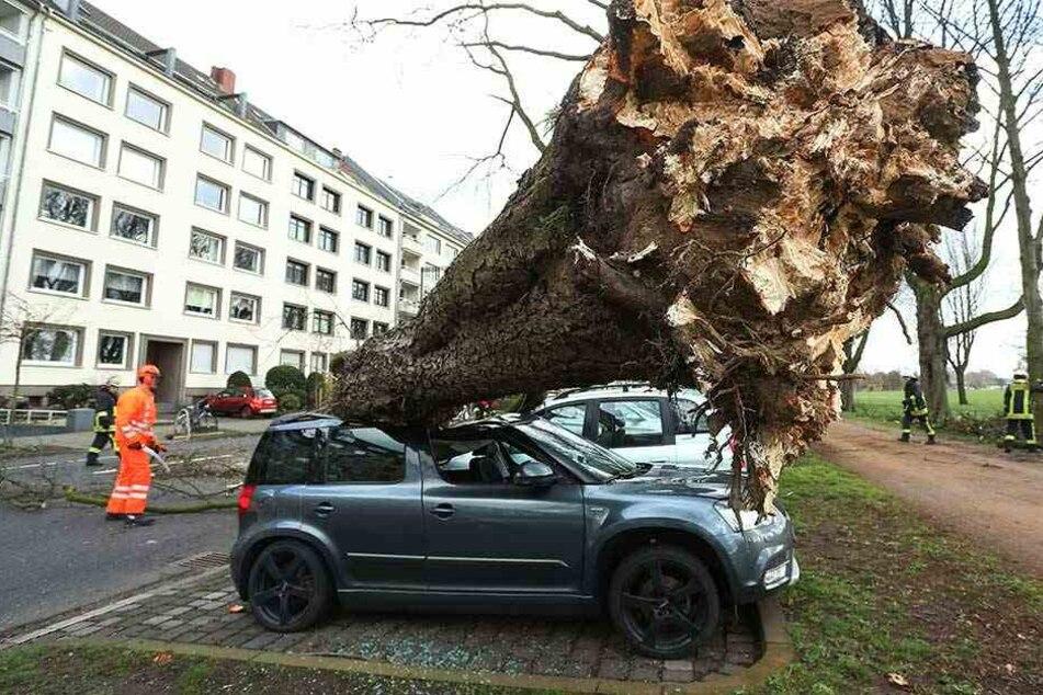 Ein umgekippter Baum liegt auf drei Autos auf der Düsseldorfer Cecillienallee.