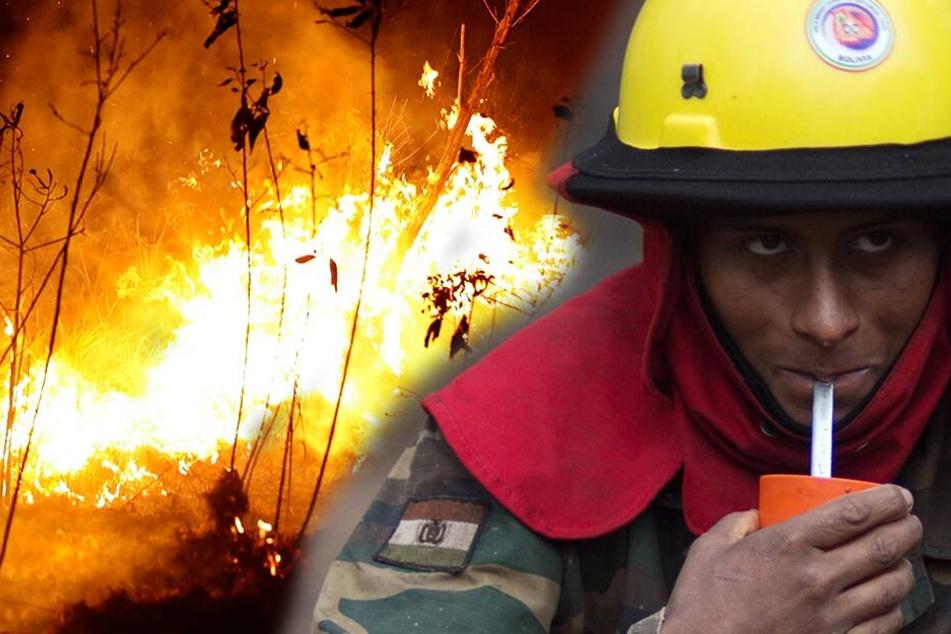 Amazonas Regenwald brennt, aber Brasilien lehnt Soforthilfe ab