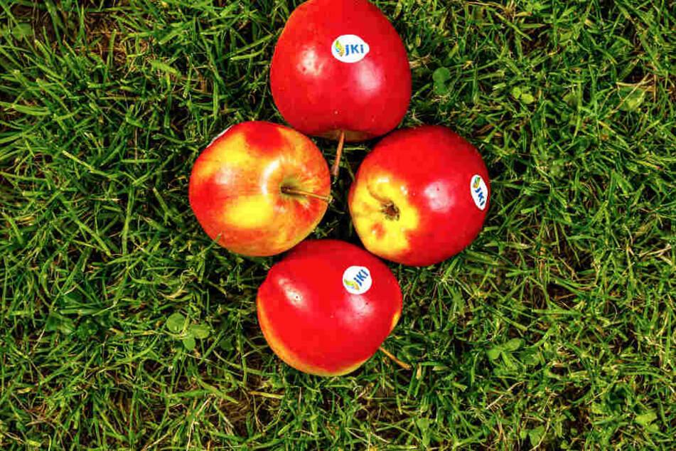 Der Joachim-Gauck-Apfel ist nicht nur knackig rot, sondern auch besonders robust und bissfest.