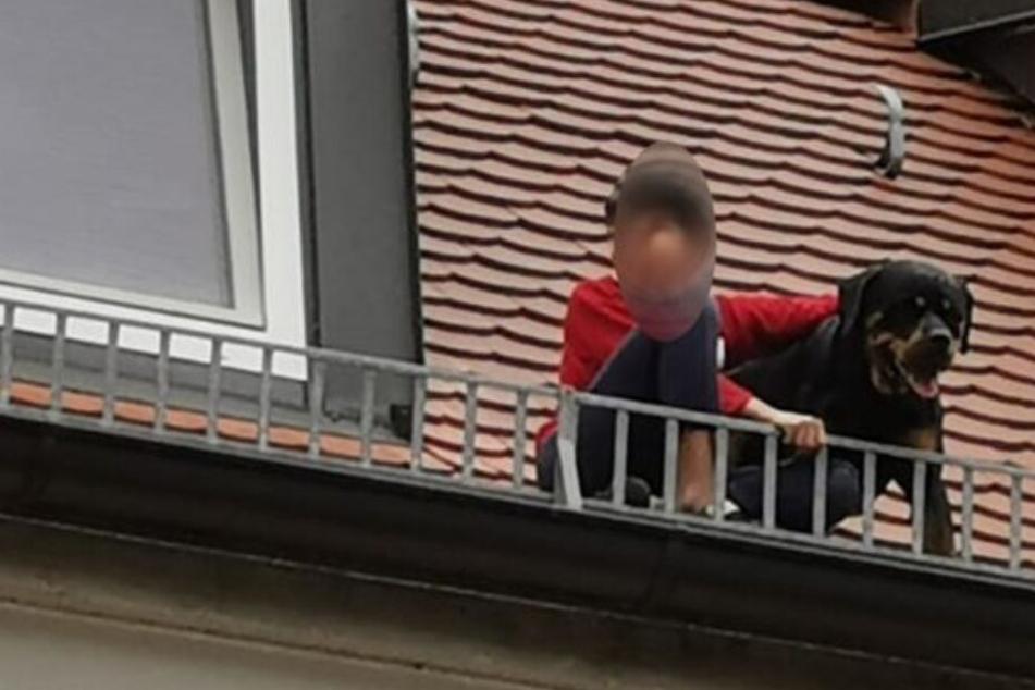 Rottweiler springt aus Dachfenster, Junge klettert hinterher, um den Hund zu retten