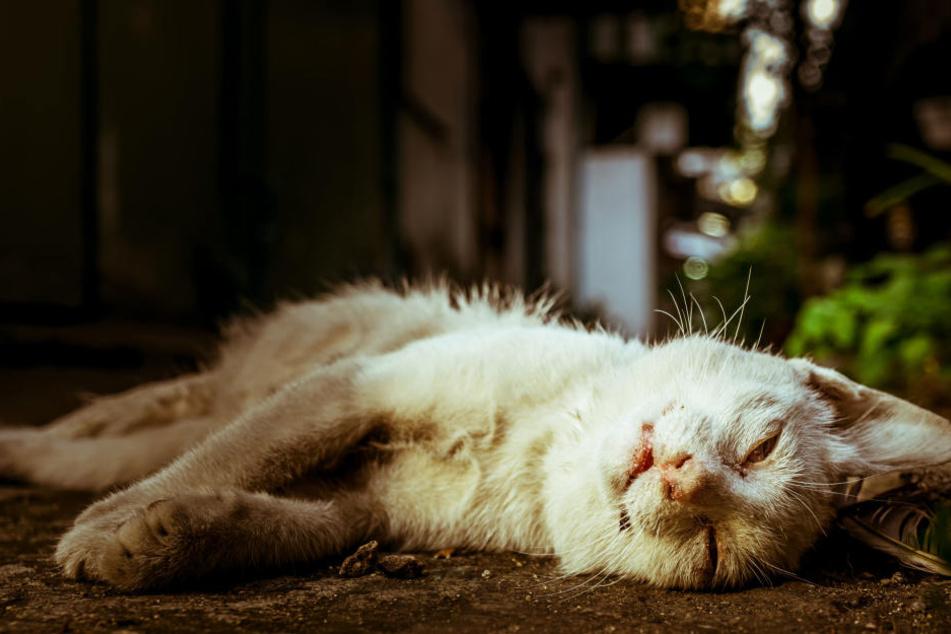 Der Täter legte den Rumpf und die Körperteile so hin, so dass es so aussah, als ob das Tier schläft. (Symbolbild)