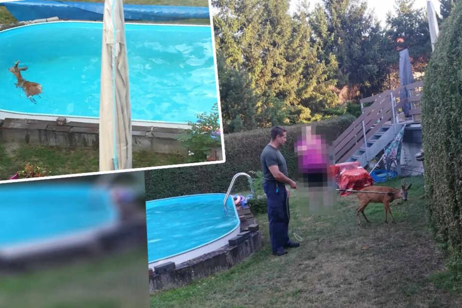 Einsatz der anderen Art: Polizei rettet Rehbock aus Swimming Pool