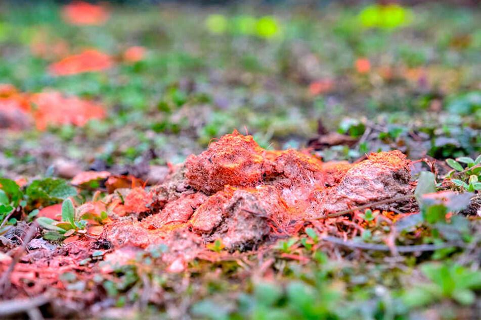 Abwechselnd in Rot und Gelb sprühte der Unbekannte die Hundehaufen an, die achtlos in der Nizzastraße liegen gelassen wurden.