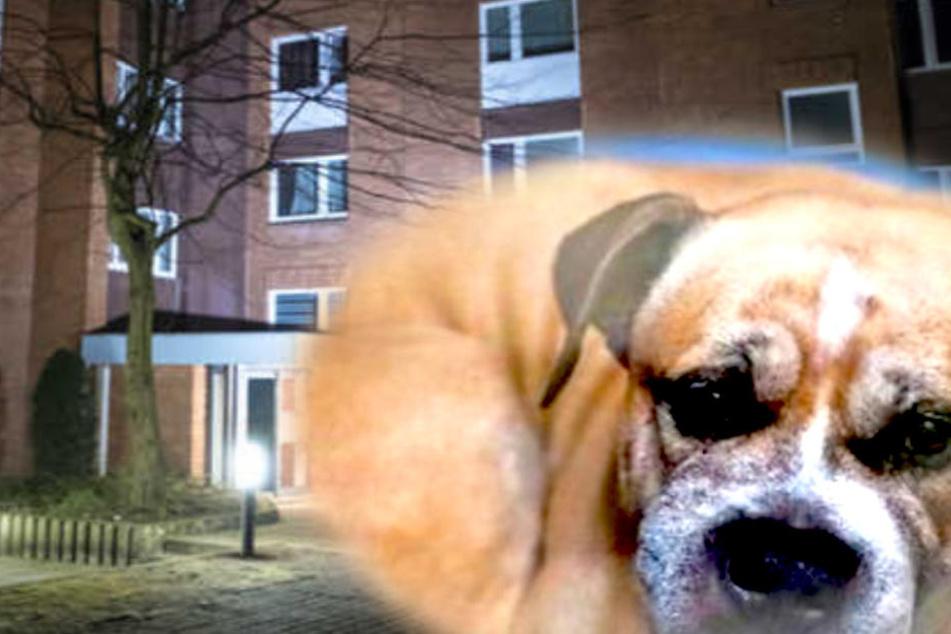 """Petition forderte: Lasst """"Killer-Hund"""" Chico leben!"""