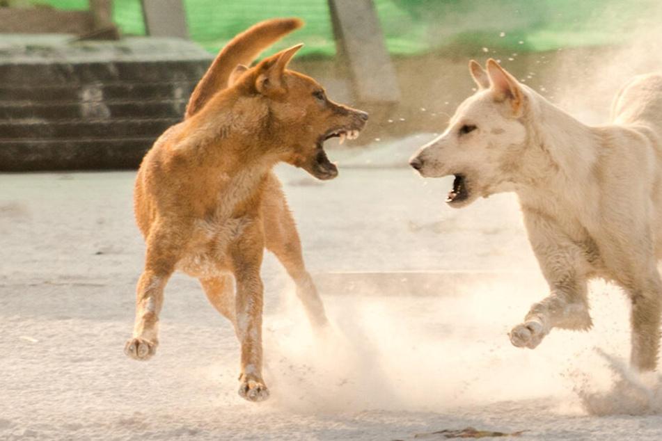 Hunde stürmen auf Siebenjährige zu und zerfleischen sie zu Tode