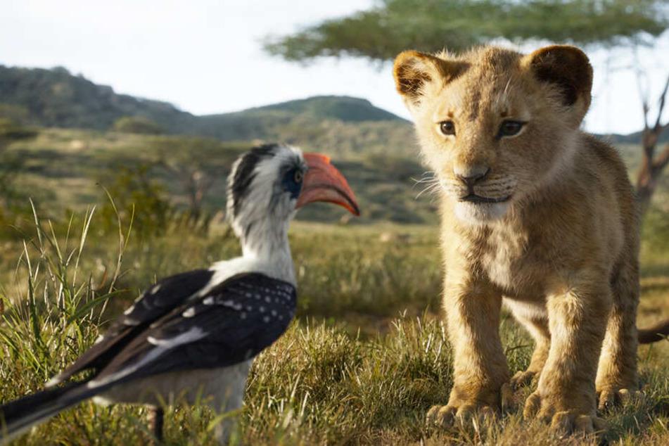 """Simba (r.) mit seinem """"Beschützer"""" Zazu."""