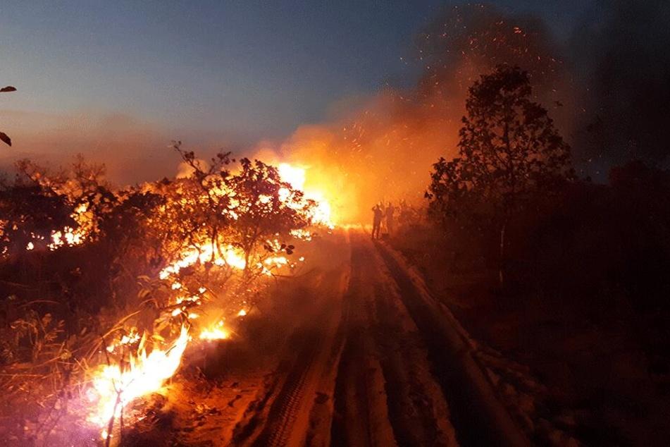 Eine Gruppe von Menschen beobachtet die Flammen bei einem Waldbrand im Naturpark Chapada dos Guimaraes.