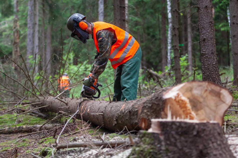 Dieses Jahr mussten Unmengen an Schadholz aus den Wäldern geholt werden.