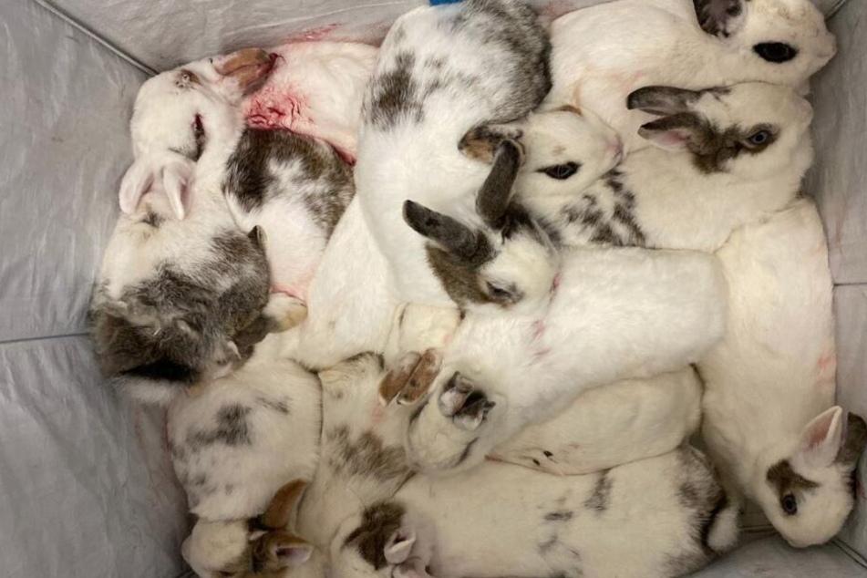 Die Kaninchen wurden in einem Laubsack gepackt und an der Straße abgestellt.