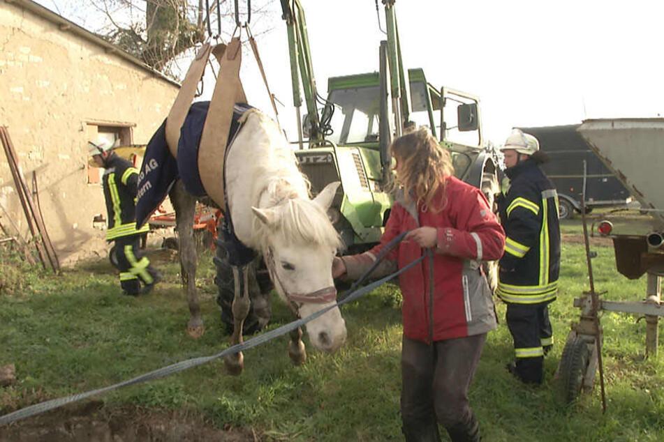 Die Feuerwehr konnte das Tier sicher bergen. Alegre geht es - abgesehen von ein paar Schürwunden - gut.