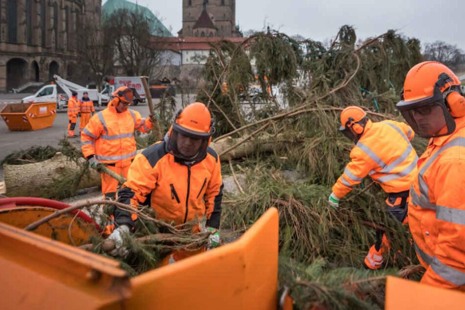 Der Baum wurde von Fachmännern umgelegt und zerkleinert.
