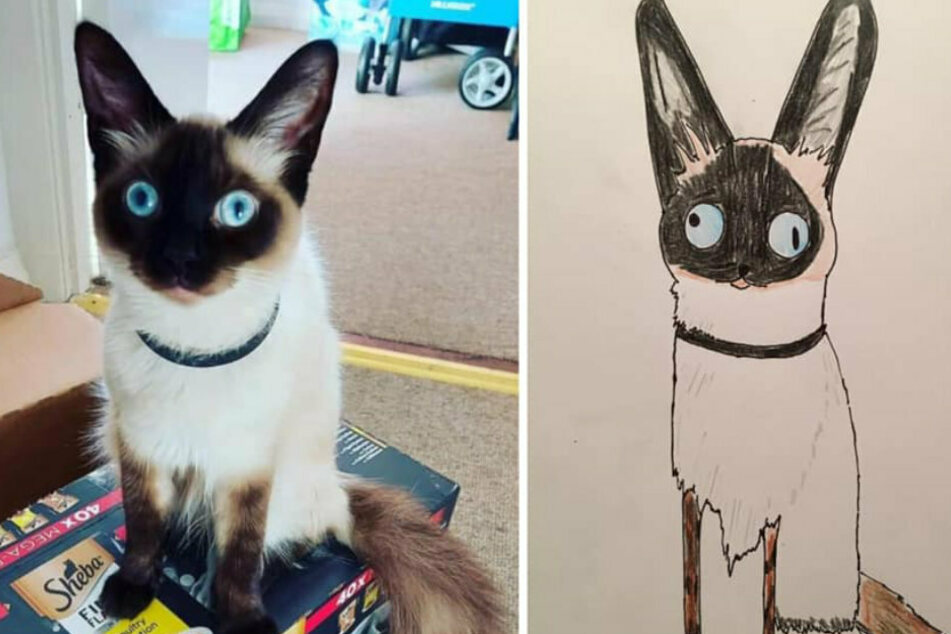 Mann zeichnet schräge Haustier-Porträts: Irre, was er damit an Geld verdient!