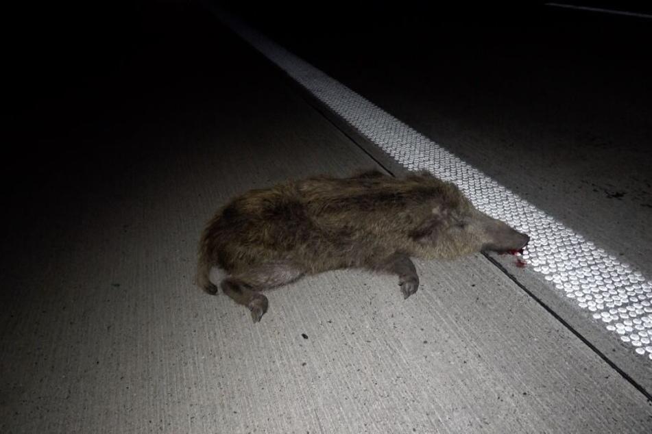 Das Wildschwein verstarb noch am Unfallort.