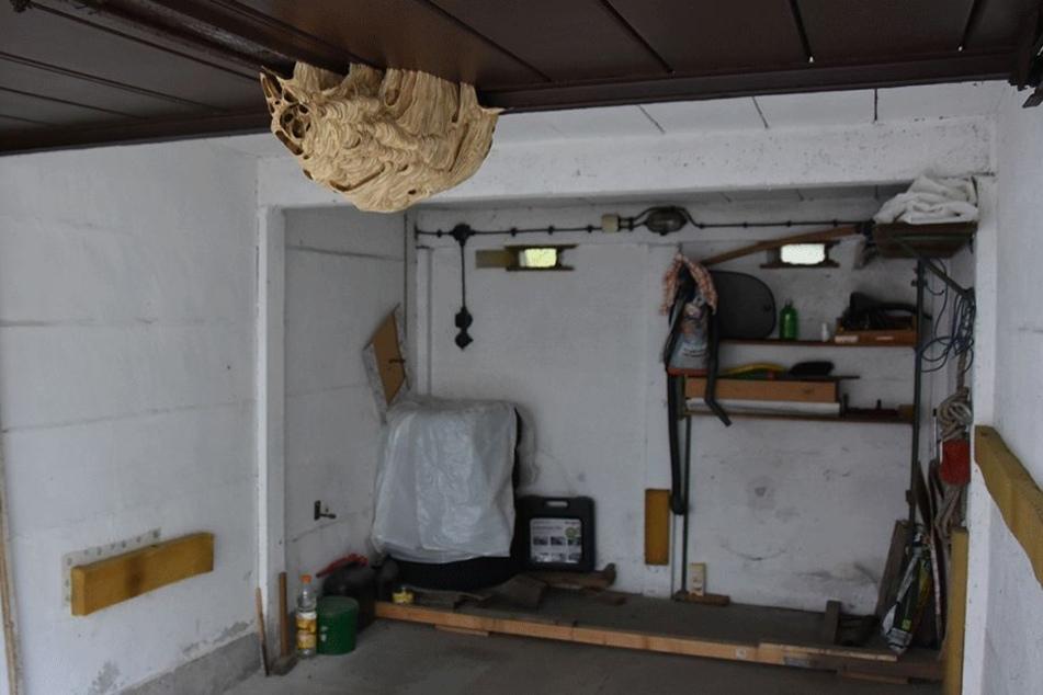 Dieses Hornissennest machte die Garage eines Görlitzers für Monate unbrauchbar.