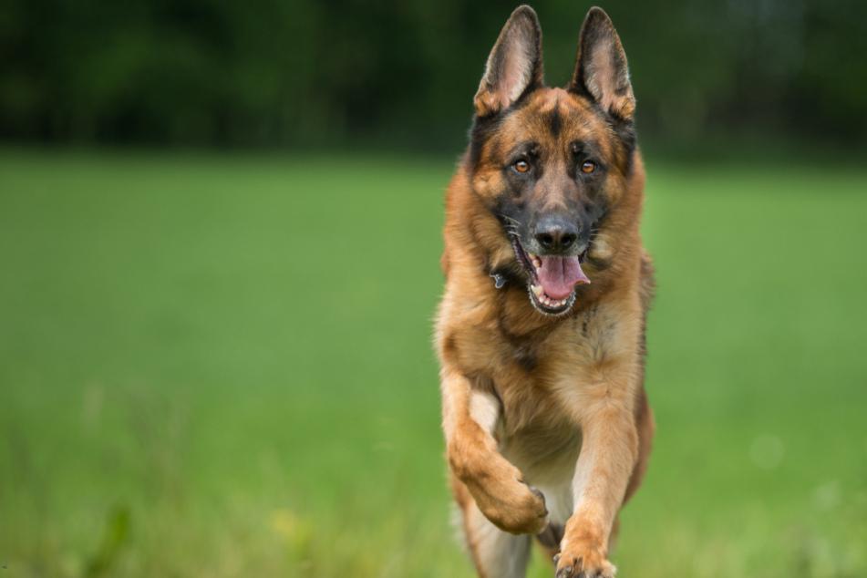 Hund greift Joggerin an, dann wird er erschossen