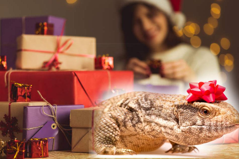 Du suchst noch Weihnachtsgeschenke? Das wäre eine tierisch gute Idee!