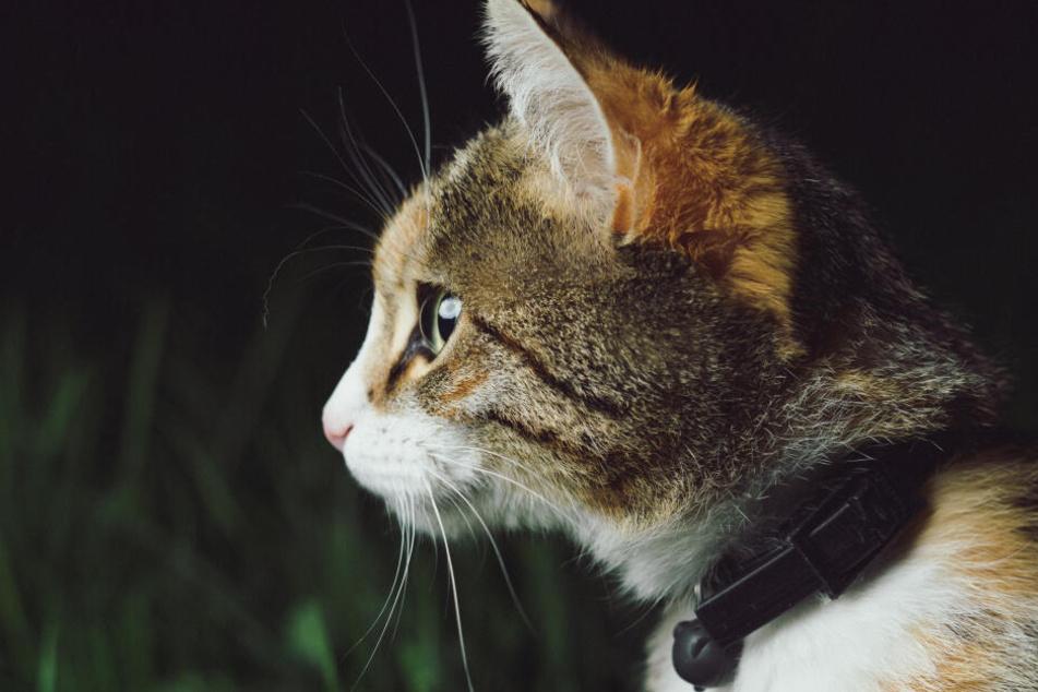 Katzen sind dämmerungsaktive Tiere.