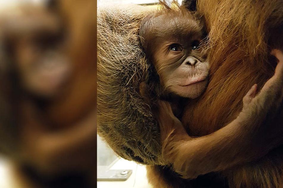 Der kleine Neuankömmling in den Armen seiner Mutter Padana (20).