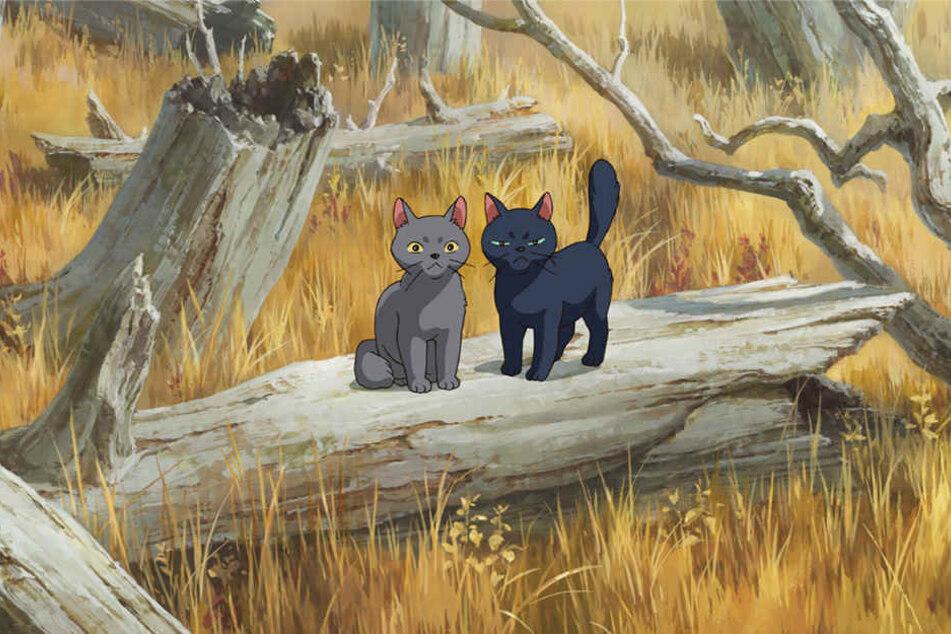 Die Katzen Tib (rechts) und Gib (links) wissen mehr, als es den Anschein hat.