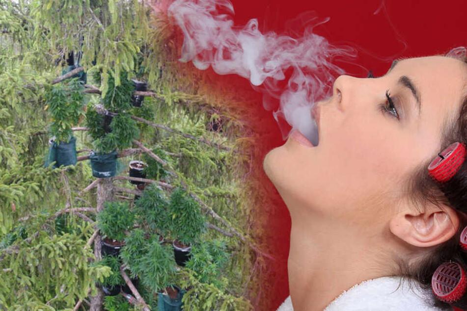 Irre Idee: Marihuana-Plantage in Baumkronen