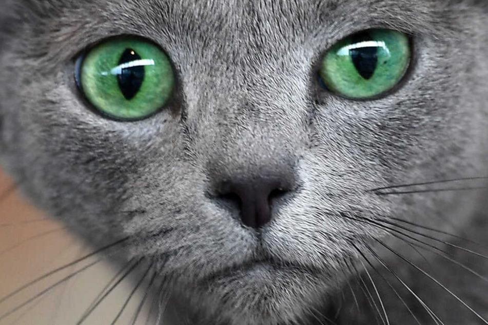 Schwere Verletzungen! Tierquäler beschießen Katze mit Armbrust