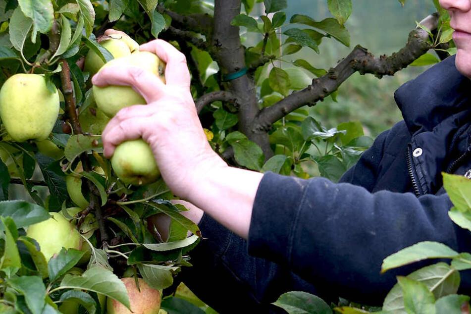 Nur so bekommst Du die Chemie von Äpfeln runter!
