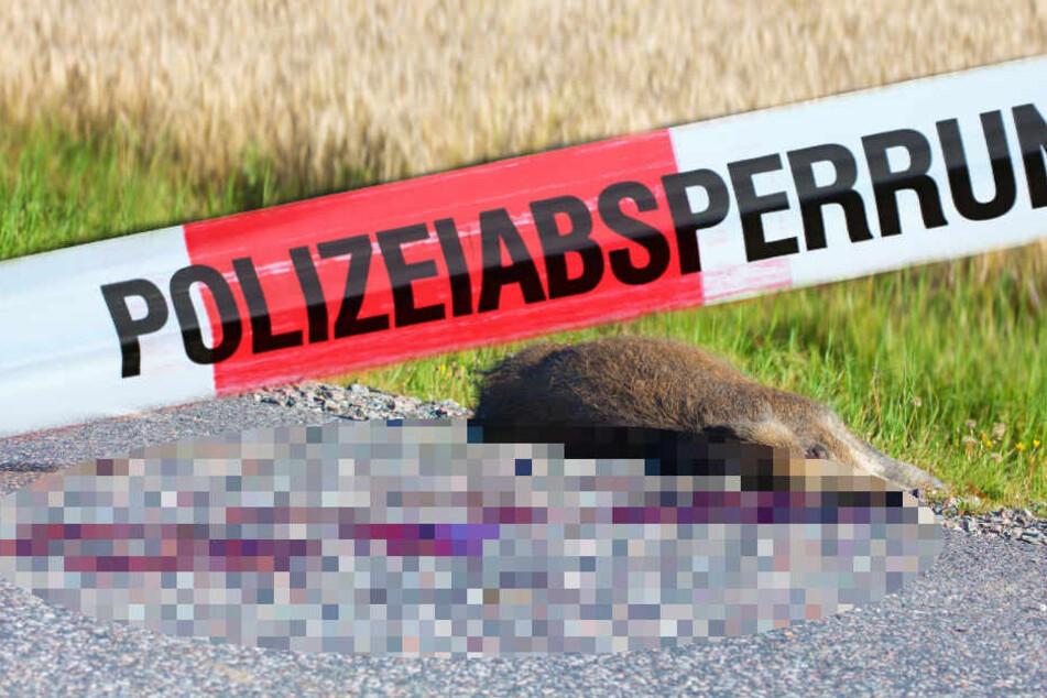 Ein Pärchen soll ein bei einem Unfall getötetes Wildschwein gestohlen haben. (Symbolbild)