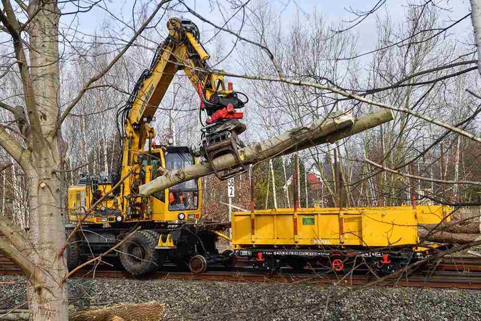 Für den neuen Haltepunkt im Küchwald muss erst das Grün weg. Montag begannen die Arbeiten am 1,3-Millionen-Euro-Projekt.
