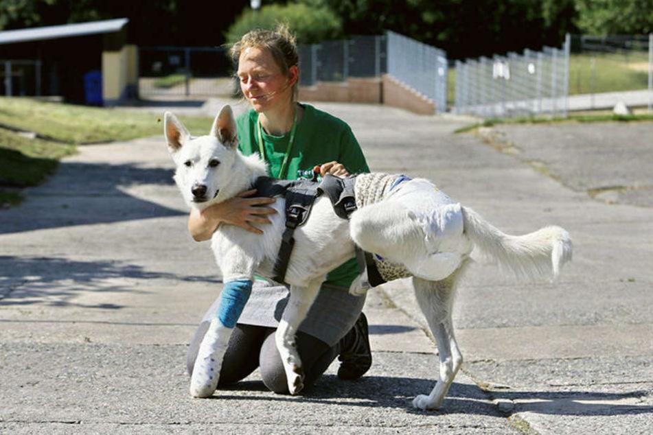 Anne Schilling (30) vom Tierheim Chemnitz mit Janosch, dessen Besitzern die OP wohl zu teuer war.