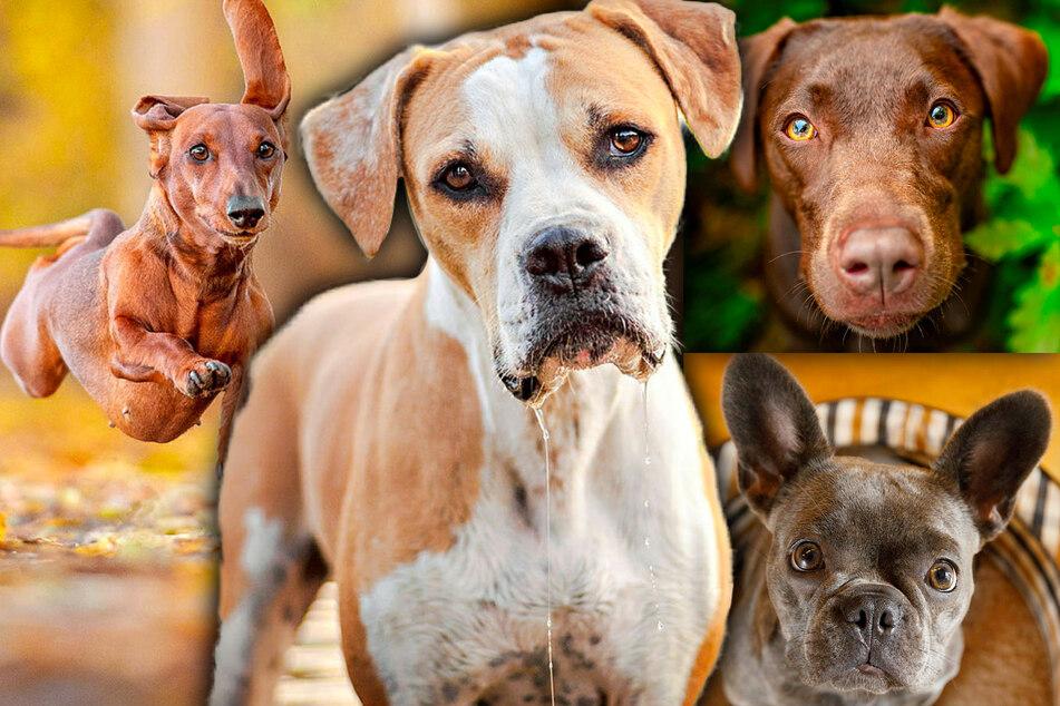 Früher praktisch, heute emotional: Mensch und Hund - es muss wohl Liebe sein!