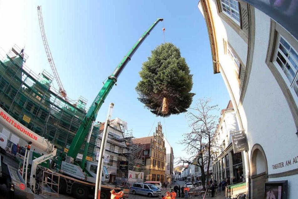 Ein Kran hievte den ersten Weihnachtsbaum bereits auf den Alten Markt.