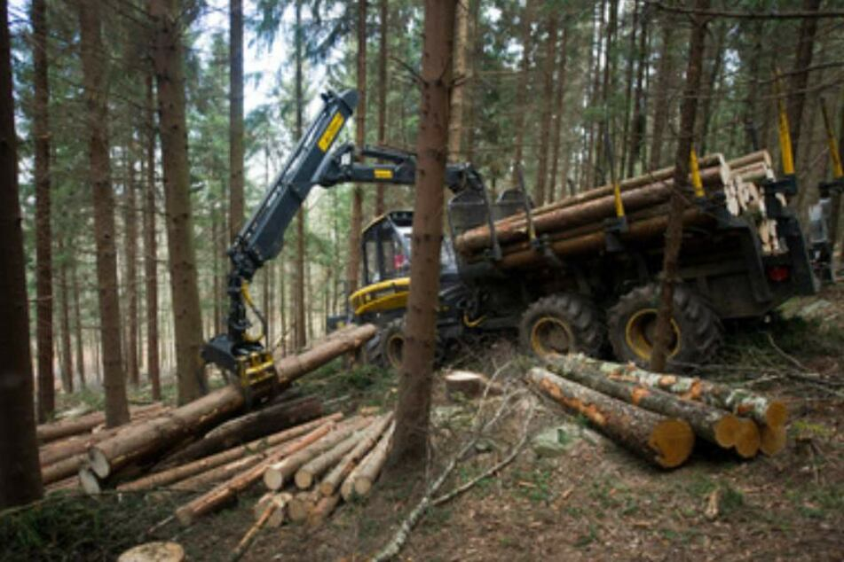 Solch ein Rückezug geriet ins Rollen und erwischte den 44-jährigen Forstarbeiter. (Symbolbild)