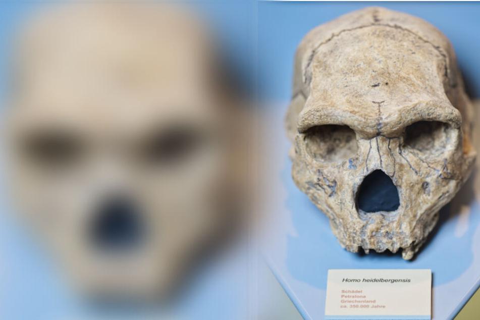Die Replik eines im griechischen Petralona gefundenen Schädels eines Homo heidelbergensis.