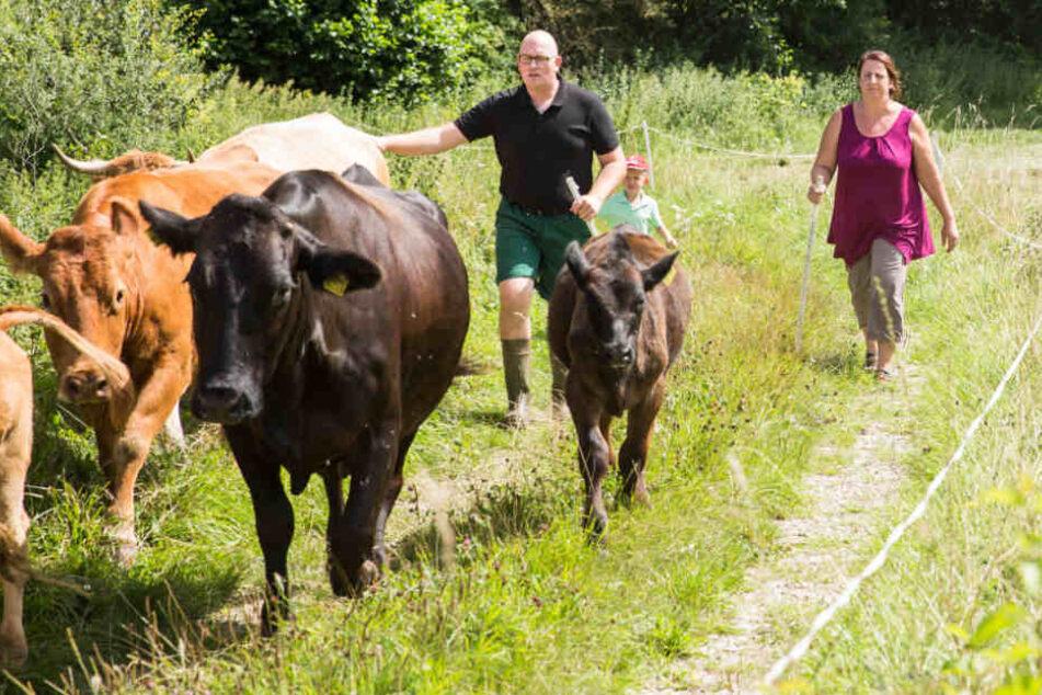 Mittlerweile ist Dina G. in die Rolle der Rinderwirtin hineingewachsen.