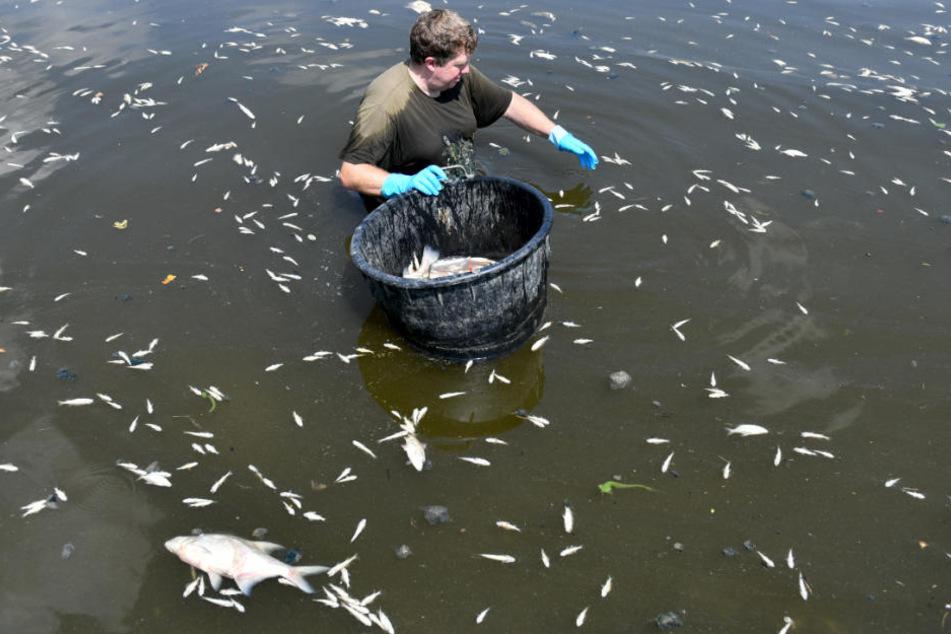 In ganz NRW sterben gerade viele Fische in den Gewässern.