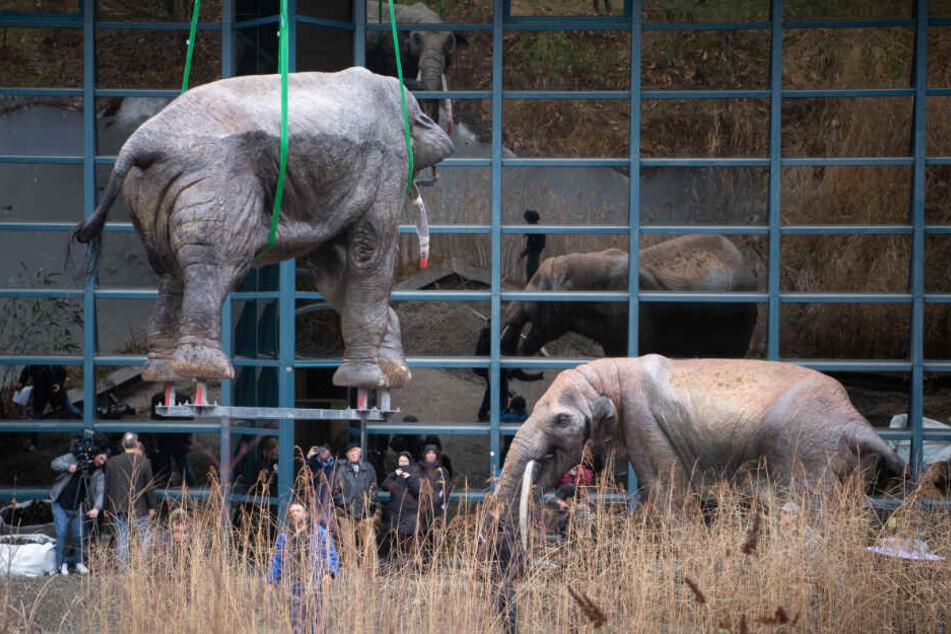 Das Modell eines Urzeitelefanten hängt an einem Kran in der Luft.